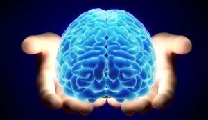 Cerebro, corazón y estómago