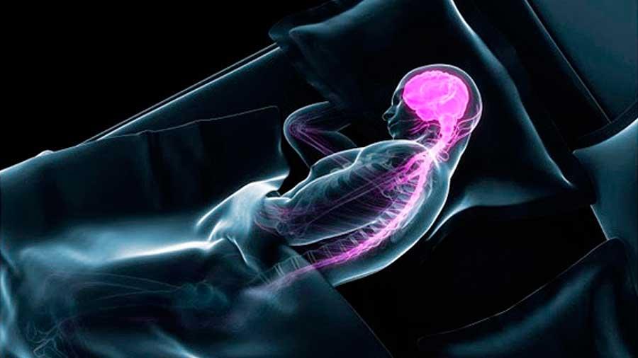 Actividad cerebral mientras dormimos